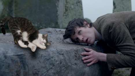 Dr Who With Cats