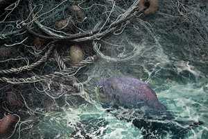 Pedro Flores 'Red Fantasma' Explores Ocean Worlds