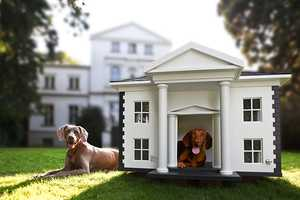 The Best Friends Home Dog Mansions are Comfortable Canine Quarters