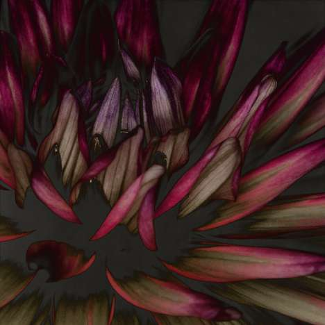 Dark Floral Photography - The Dahlia by Carsten Witte Series is Fantastically Dramatic