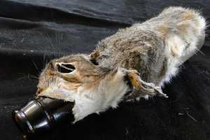 The Squirrel Beer Bottle Cozy is Disturbing and a Bit Morbid