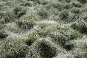 Jurgen Heckel's 'Gras' Shows an Eco-Embrace
