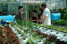 Urban Farming Partnerships - BrightFarms Takes Downtown Gardening to New Levels