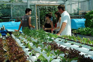 BrightFarms Takes Downtown Gardening to New Levels