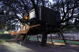 The Rooted Tree House Integrates Itself into Nature