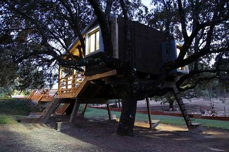 rooted tree house