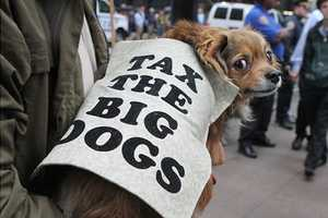 The Buzzfeed 'Dogs of Occupy Wall Street' Snaps are Animal Outcries