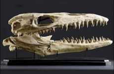 Bid on a Triceratops Skeleton