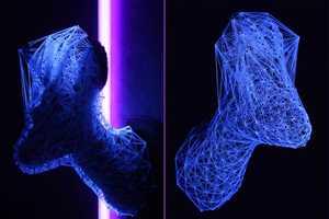 Julien Salaud Creates Webs of Dead Animals