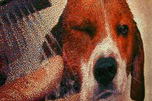Joel Brochu Created a Portrait of a Beagle Using Nonpareils