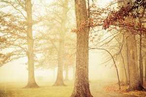 Joy St. Claire Shoots Serene Outdoor Shots