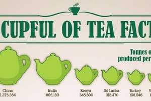 'A Cupful of Tea Facts' Gives a Lot to Pour Over