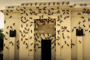 Rafael Gómezbarros Covers Alonso Gallery in a Swarm of Ants