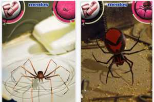 Fight a Creepy Crawly With Mentos' Spider Swiper App
