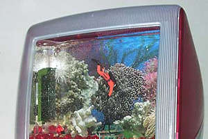 MacQuarium Combines Geeky Love of Fish and Macs