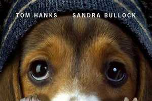 The Best Picture Dog Posters Make the Oscars More Interesting