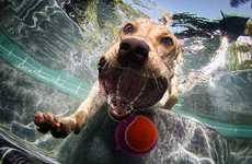 Seth Casteel Captures Adorable and Frightening Pets Swimming