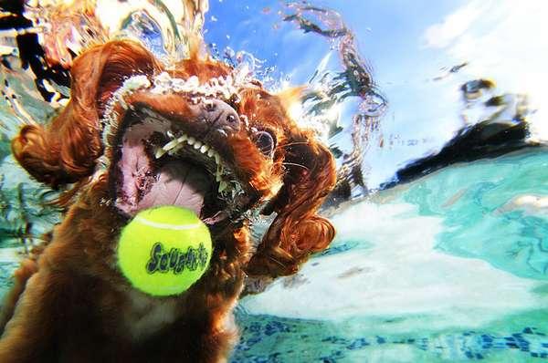underwater dogs 9