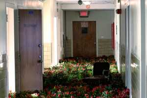 Anna Schuleit Brings Flowers to the Psychiatric Ward