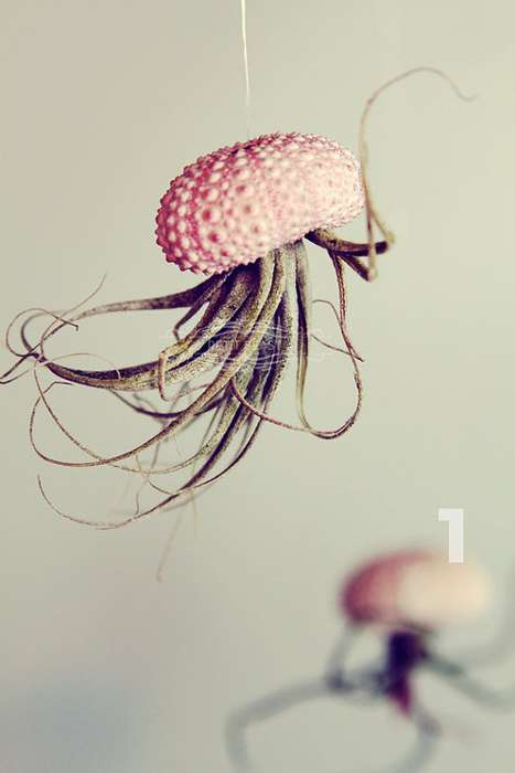 Green Jellyfish Air Plant