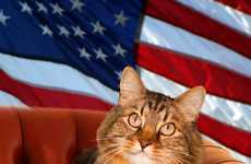Kitty Political Campaigns