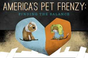 The Americas Pet Frenzy Infographic Takes a Look at the Costly Industry