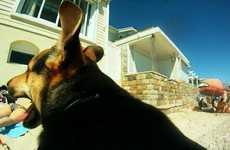 Canine Captured Videos