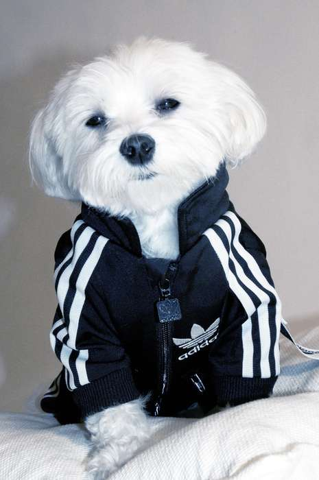 Adidas puppy jumpsuit