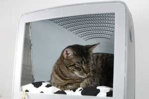 The Upcycled Apple Computer Pet Bed Looks Comfy Enough for a Human