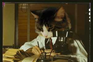 The 'Cat Scientists of the 1960s' Blog is Hilarious