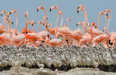 Bird Clique Photography