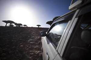 The Jonah M Kessel 'Specifically Socotra' Series is
