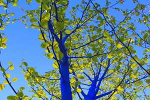 'Blue Trees' by Konstantin Dimopoulos Advocates Awareness