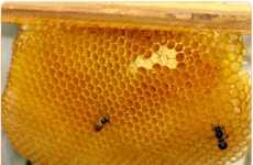 Farmer-Empowered Beekeeping