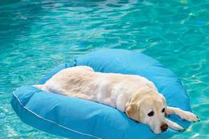 Keep Your Canine Afloat With This Pet Floatie