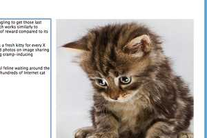 Written Kitten is a Seriously Cute Journalism Motivater