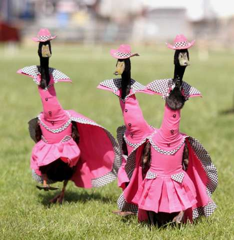 pied piper duck fashion show