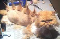Stegosaurus Kitty Haircuts