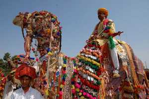 The Camel Festival in Bikaner, India is Eclectic