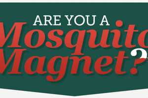 The 'Are You A Mosquito Magnet?' Infograph is Anything But Repellant