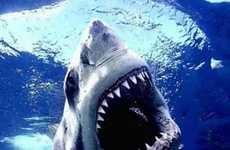 95 Shark Designs