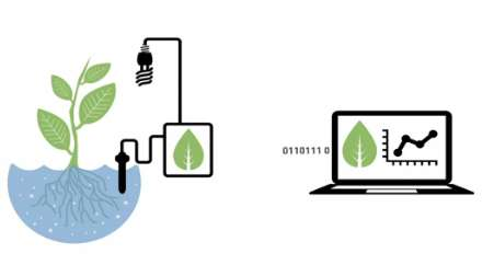 Internet-Supported Gardens - Bitponics Hydrophonics Program Assists Through Sensors