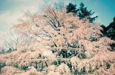 Smoggy Sakura Snapshots - Sakuramadelica by Takeshi Suga is a Dreamy World of Wonders