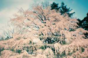 Sakuramadelica by Takeshi Suga is a Dreamy World of Wonders