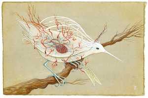 Jaime Zollars Illustrates a Beautiful Series of See-Thru Birds