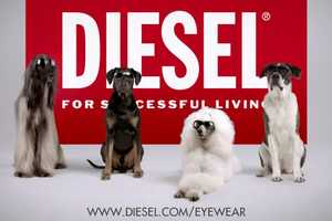 The Diesel Spring Summer 2012 Ad is Unexpected