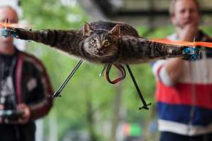 The Orvillecopter is a Disturbing Creation That Uses a Dead Cat to Soar