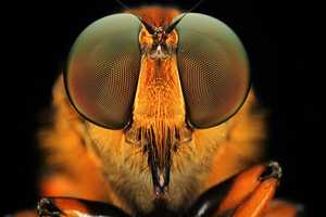 The Macro Photos of Insect Eyes by Shikhei Goh are Shocking