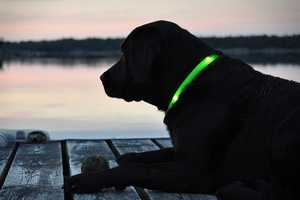 The Glowdoggie LED Dog Collar Keeps Pets Safe at Night