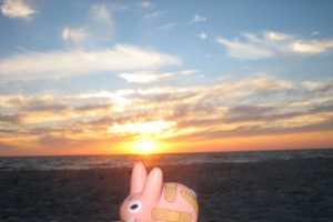 The Smorkin' Labbit is a Badass Toy Bunny